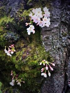Moss+Blossoms